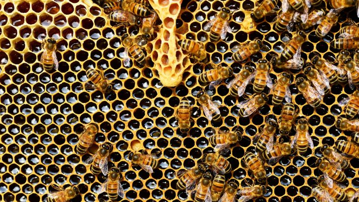 Bees crawling on a honeycomb with honey.