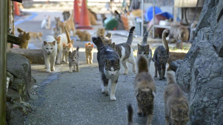While the cats can be seen as a unique way to bring tourists into an area, their welfare may be jeopardized without the necessary care.