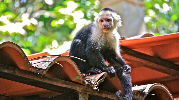 According to a new model, primate species that can harbor and potentially spread the Zika virus are common and often live near people.