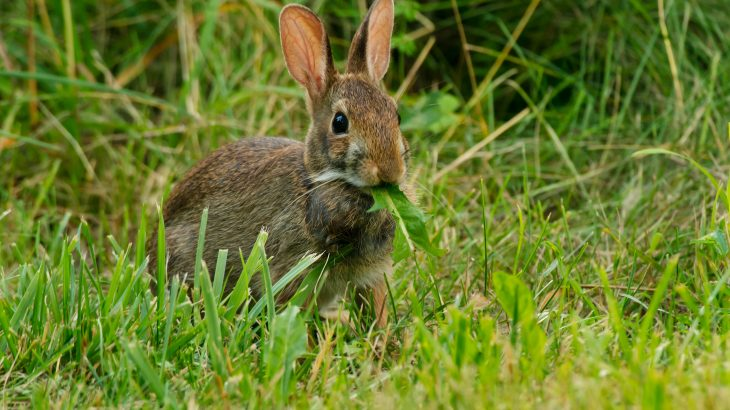 Researchers found that rabbits prefer plants packed with DNA while invertebrates seem to be specialists that prefer plants with smaller genomes.