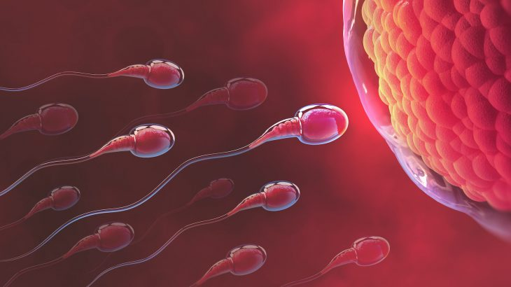A new study led by the University of York has uncovered a mechanism that helps sperm achieve their mission of fertilizing an egg.