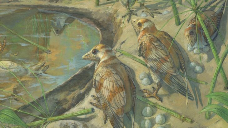 A team of experts led by the Chinese Academy of Sciences has described the first fossil bird ever found with an egg preserved inside of its body.