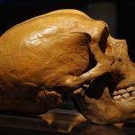 A Neanderthal tooth from France has revealed new information about the diet of humans' ancient cousins.