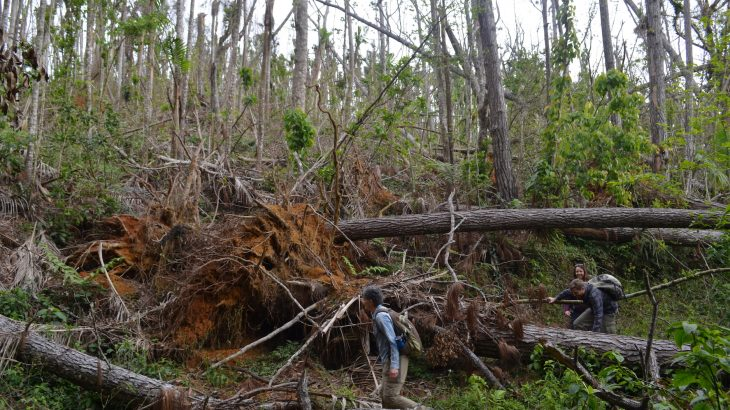 A new study has found that the damage left behind by Hurricane Maria in the forests of Puerto Rico was unprecedented in modern times.