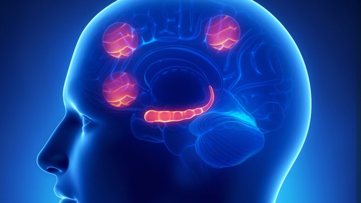 The findings of a new study suggest that subregions of the brain's prefrontal cortex play an important role in different anxiety disorders.
