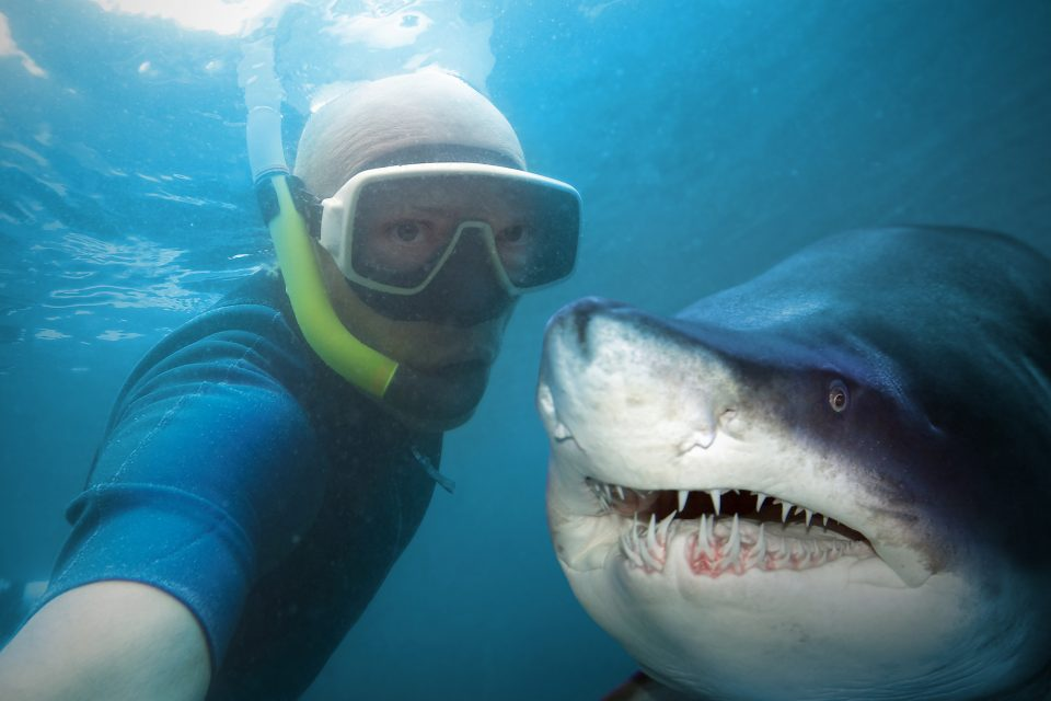 With the costs so high for humans and wildlife alike, we must ask, why do people continue to exhibit such reckless behavior just to take a selfie?