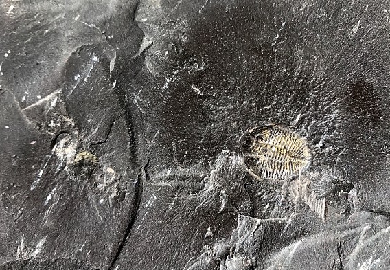 A treasure trove of fossils dating back as far as 518 million years discovered in Southern China is rivaling that of other rich fossil sites.
