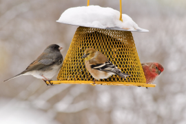 Researchers set out to investigate how the act of feeding birds may influence people, and found that these individuals have a significant impact on conservation.