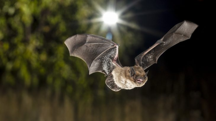 A recent study has revealed new evidence of how exactly UV light emitting and non-UV emitting street lamps affect the activity of city bats.