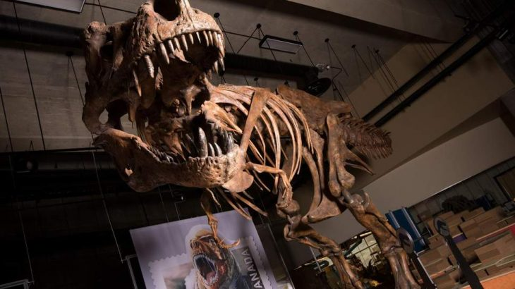 Paleontologists have reported that a Tyrannosaurus rex skeleton, first discovered in 1991 in Saskatchewan, Canada, is the largest ever found.