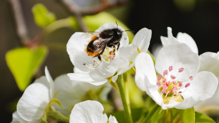 New research has found that one-third of all bee species native to the UK are declining, which could have a huge impact on the country's agricultural industry.
