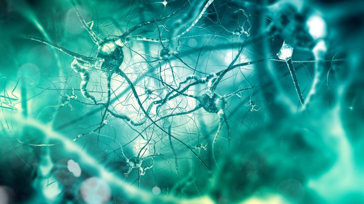 A team of neuroscientists at the Severo Ochoa Molecular Biology Center (CBMSO) in Madrid has found new evidence that older adults are still developing new brain cells.