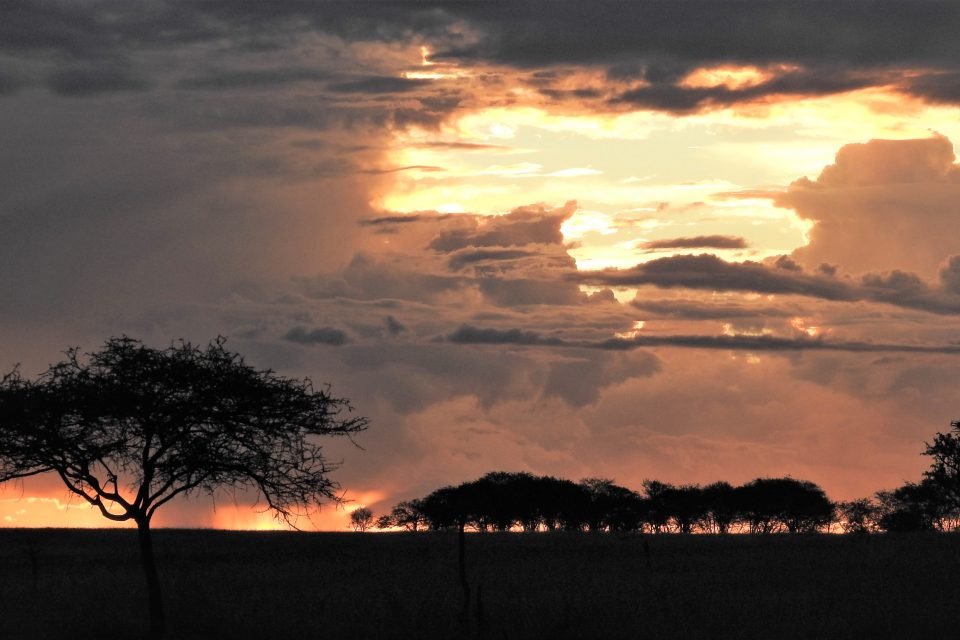 """A new study from the University of Groningen shows that the wildlife in Africa's Serengeti-Mara ecosystem is being """"squeezed"""" to the core by increasing human activity."""