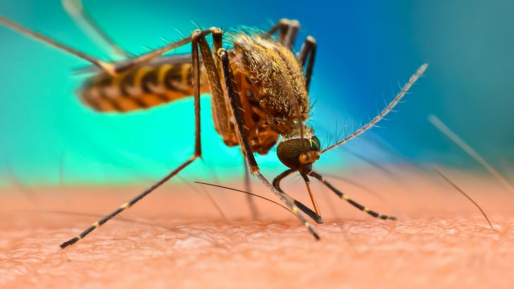 A new study is warning that the combination of climate change and rising temperatures will expose more people to diseases carried by mosquitoes.