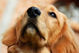 New research from the The University of Rennes shows that dogs can sniff out impending epileptic seizures.