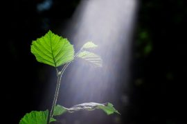 Researchers have created artificial cells that make their own energy, the same way plants do: through photosynthesis. The discovery could help scientists working on developing new ways to produce clean energy.