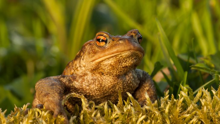 In their research to determine why so many amphibian species are dying out,scientists are asking for your help.