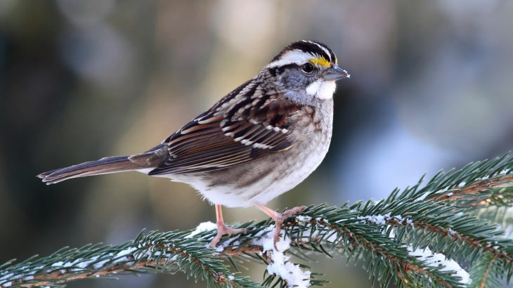 Birds that use chirps called flight calls to help navigate are more likely to collide with lighted buildings compared to other migrating birds that don't produce such calls.