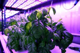 """Called """"cyber agriculture,"""" this method of combining computer technology with botany and chemistry could not only improve crop flavor, but also enhance disease-fighting compounds."""