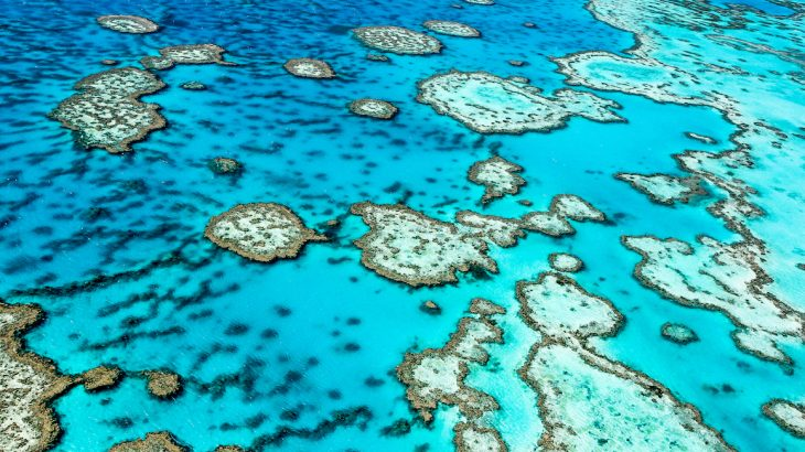 Global warming has triggered four mass bleaching events across the Great Barrier Reef in 1998, 2002, 2016, and 2017.
