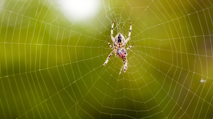 Along with being used in space by NASA, this non-spider silk could be used in manufacturing bulletproof Kevlar vests and surgical sutures.