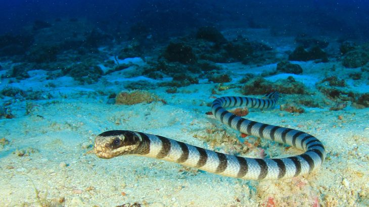 "Footage of sea snakes swimming at around 800 feet deep in the ocean, an area called the ""twilight zone,"" has baffled marine biologists."