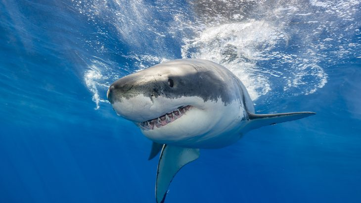 A new study has found that sharks have high concentrations of mercury as well as other dangerous heavy metals like arsenic and lead in their blood.
