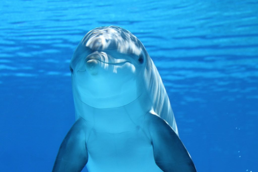 Are Dolphins, Sharks, and Whales Mammals? • Earth com