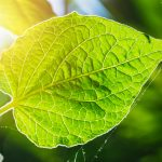 Though photosynthesis has room to improve, we still have much to learn from plants, and new forms of photosynthesis are still being discovered.