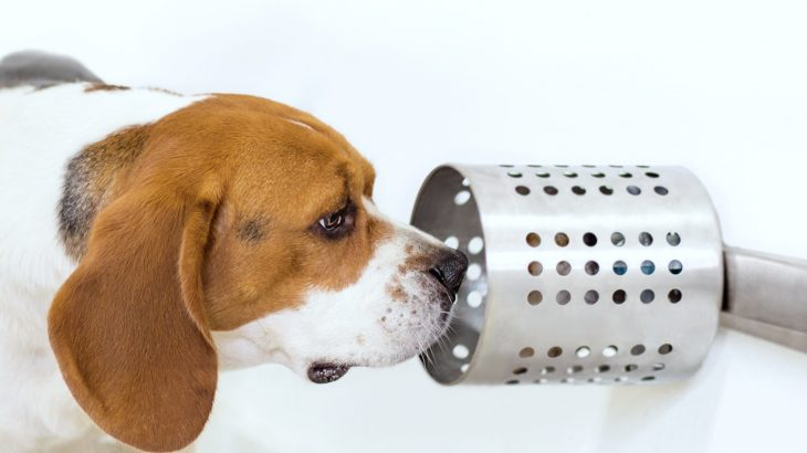 A new study has revealed that dogs can use their remarkable sense of smell to identify cancer in blood samples with an accuracy rate of nearly 97 percent.