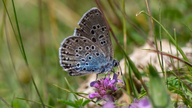 The annual UK Butterfly Monitoring Scheme has revealed that more than two-thirds of butterfly species returned in greater numbers in 2018 compared to the previous year.