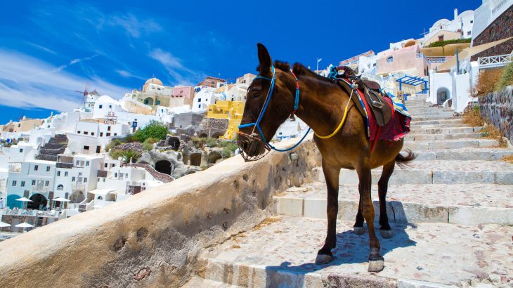 Local merchants in Santorini sell donkey rides to help carry passengers and their luggage from the island's port to its capital, some 600 steep steps up.