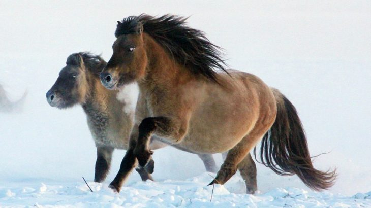 Researchers from Russia and South Korea are in the process of cloning a 42,000-year-old horse that has been extinct for around 4,000 years.