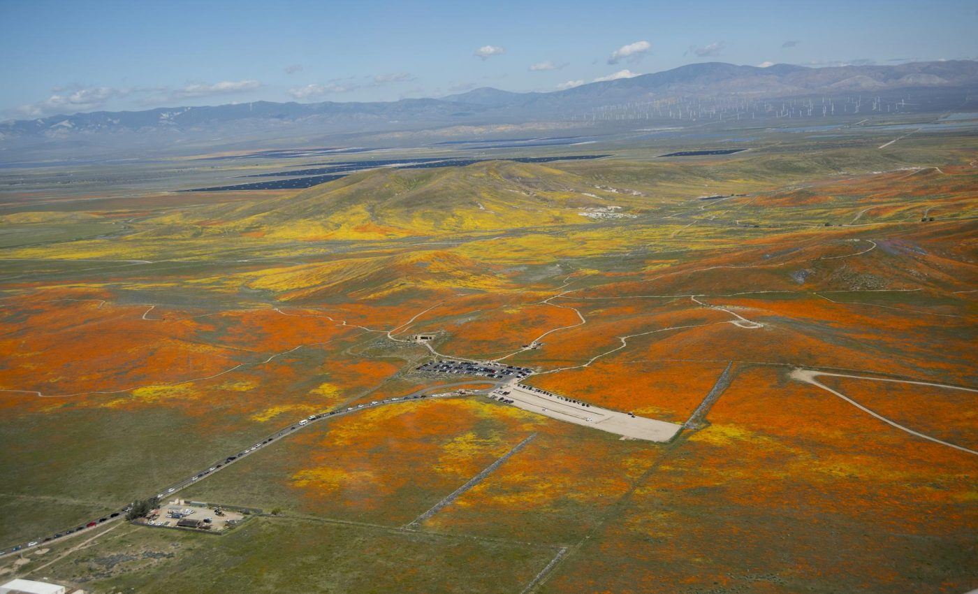 "Today's Image of the Day from NASA Earth Observatory features a ""superbloom"" of poppies and wildflowers across Antelope Valley in Southern California."