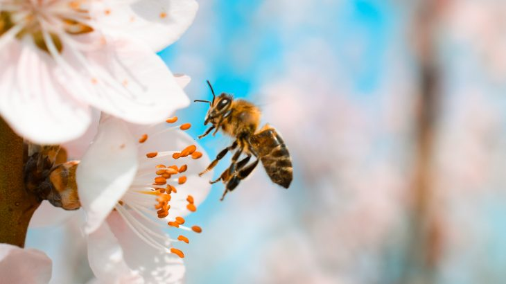 A new study has found that when used in conjunction with a popular fungicide, flupyradifurone is harmful to bees.