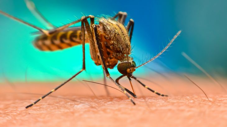 The range of mosquito and tick-borne (vector-borne) diseases like chikungunya, dengue fever, leishmaniasis, and tick-borne encephalitis (TBE) is rapidly expanding.