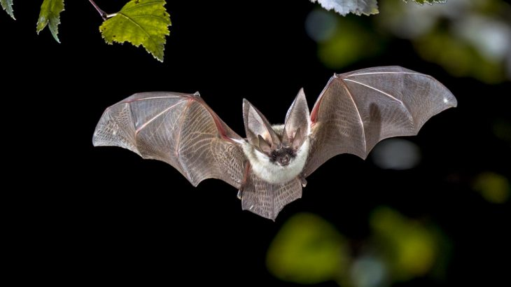 A team of researchers from the University of Maryland say that four bat species could offer insight into mammal longevity, and maybe longer lives for humans.