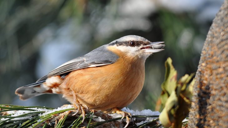 Harsh winter conditions negatively impact birds that are forced to leave their homes in northern forests and wander far from their normal ranges to find food.