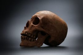 According to researchers at the University of York, social communication played an influential role in how the human face shape evolved.