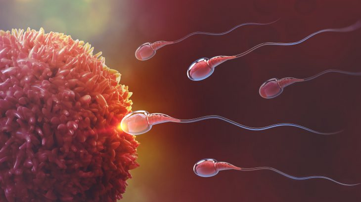 A new study has revealed that when multiple males are competing for a mate, it impacts the quality performance of sperm.