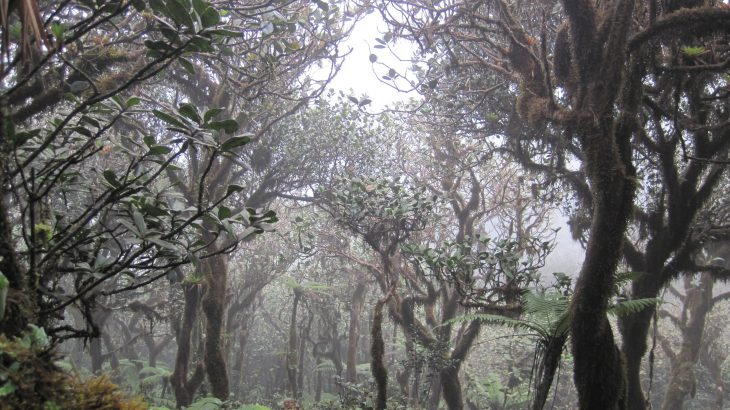 Scientists have found that climate change could shrink the Western Hemisphere's prolific cloud forests as much as 90% by 2060.