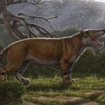 22 million-year-old fossils once belonged to a new species of a giant mammal that was bigger than a polar bear.