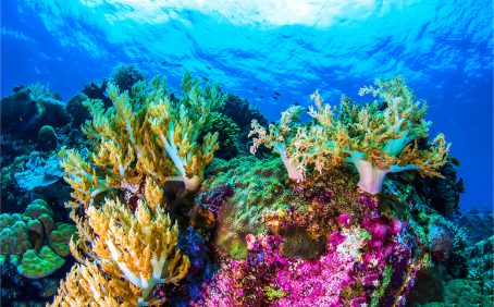 Two biology experts have developed a technique for measuring the amount of living coral on a reef by analyzing DNA collected in small samples of seawater.