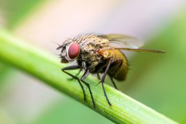 A new study details how nanopores allow fruit flies to detect chemicals in the air, as well as the gene behind their development.