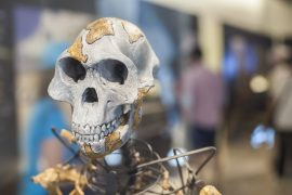 Based on remains recovered in northern Greece, experts believe that a previously unidentified group of hominins may have emerged in southeastern Europe.