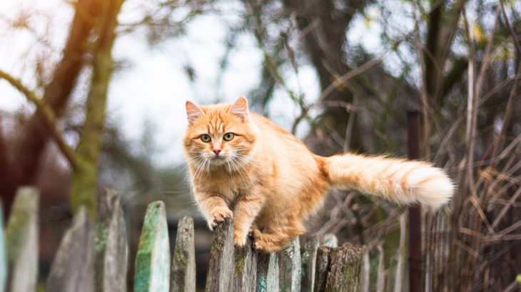 A team of researchers has found that domestic cats who spend time outdoors are three times more likely to pick up contagious diseases compared to indoor-only cats.