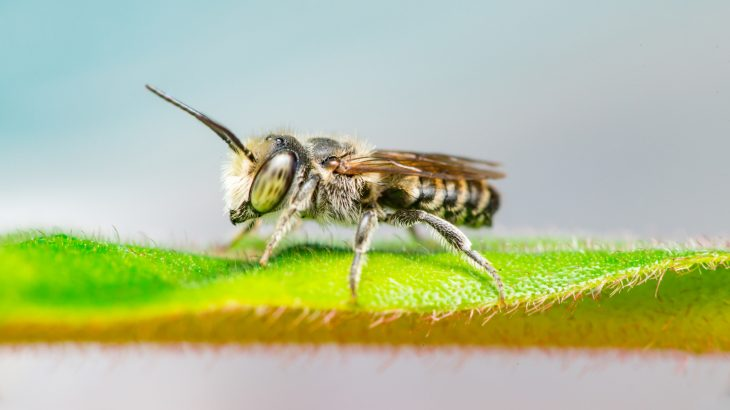 According to a new study from the University of New Hampshire, 14 wild bee species in New England are currently in trouble.