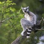 Vohibola is a biodiversity hotspot and one of the last remaining major forests in the country of Madagascar.