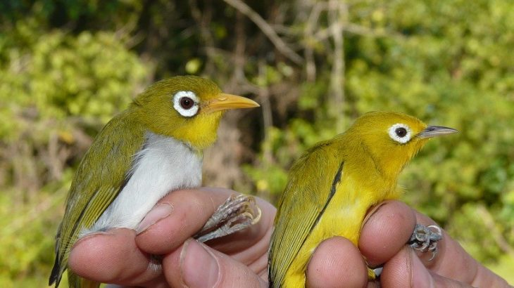 Zoologists at Trinity College Dublin have discovered two new bird species in the Wakatobi Archipelago of Sulawesi, Indonesia.