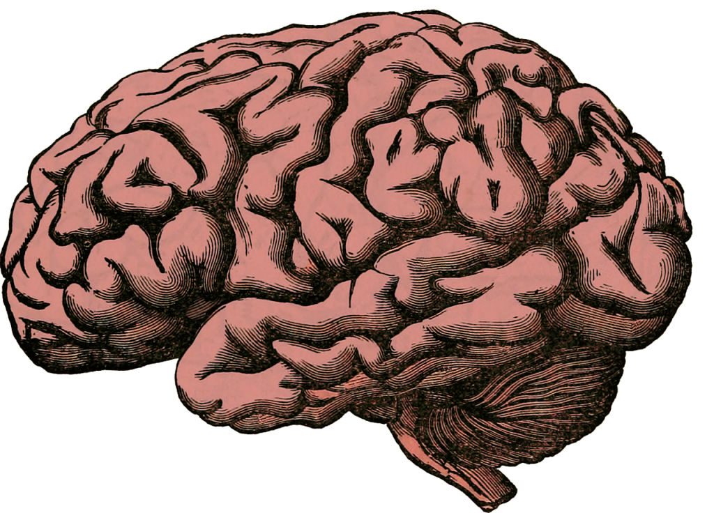 A drawing on a human brain.